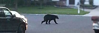 The black bear is coming for the black bean burgers!