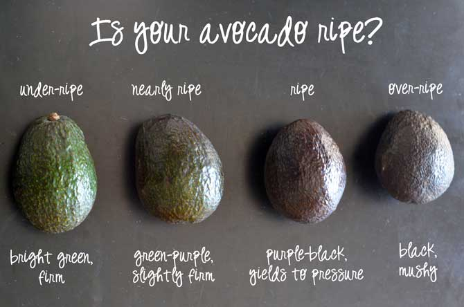 How to tell if an avocado is ripe or rotten!  More tips in the article! | hostthetoast.com